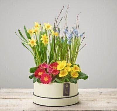 Dazzling Mixed Planted Hatbox: Booker Flowers and Gifts
