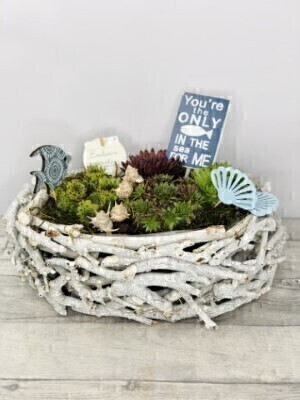 Driftwood Sempervivum Plant and Shell Arrangement: Booker Flowers and Gifts
