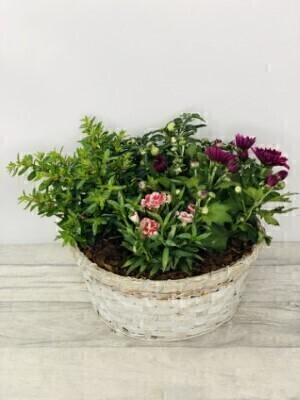 Mixed Planted Round Basket: Booker Flowers and Gifts
